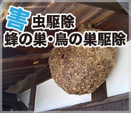 害虫駆除・蜂の巣・鳥の巣駆除